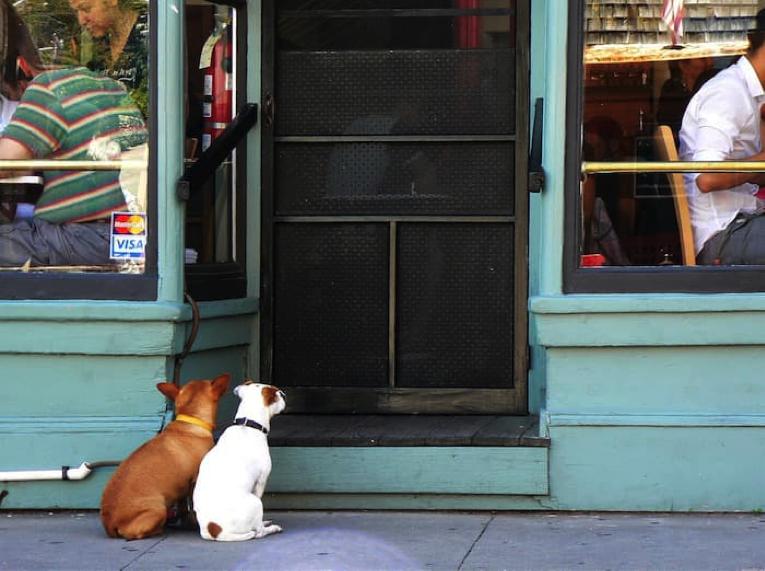 mancato accesso degli animali nei luoghi pubblici
